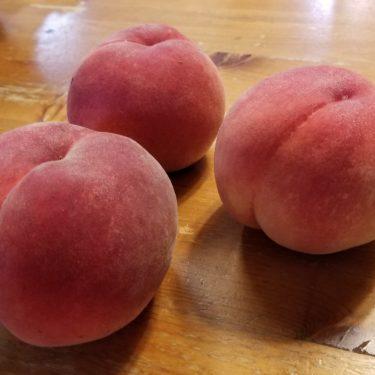 【横浜で夏の味覚狩り2020】梨や桃のもぎ取り体験